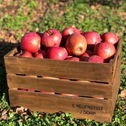 황금잎 사과 5kg